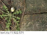 Текстура. Стоковое фото, фотограф Александр Бетехтин / Фотобанк Лори