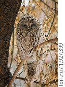 Купить «Сова на ветке», фото № 1927399, снято 13 февраля 2010 г. (c) Антон Ильяшенко / Фотобанк Лори