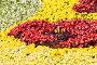 Цветочная клумба, фото № 1935031, снято 28 августа 2005 г. (c) Кравецкий Геннадий / Фотобанк Лори