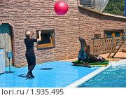 Купить «Сочинский дельфинарий. Игра в мяч с морским котиком», фото № 1935495, снято 7 августа 2010 г. (c) Анатолий Ефимов / Фотобанк Лори