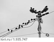 Птицы мерзнут на проводах. Стоковое фото, фотограф Иван Котов / Фотобанк Лори