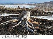 Купить «Погибший лес в пригороде», фото № 1941103, снято 2 мая 2008 г. (c) Валерий Александрович / Фотобанк Лори