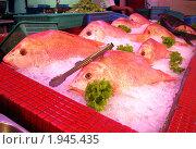 Красная рыба во льду. Стоковое фото, фотограф Сергей Тарасов / Фотобанк Лори