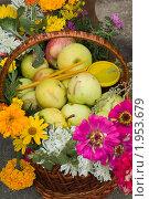 Купить «Фрукты и цветы в корзине», фото № 1953679, снято 18 августа 2010 г. (c) Владимир Фаевцов / Фотобанк Лори