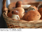 Купить «Белые грибы в корзине», эксклюзивное фото № 1955323, снято 30 августа 2010 г. (c) Яна Королёва / Фотобанк Лори