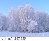 Снежная шапка из деревьев. Стоковое фото, фотограф Станислав Горбачев / Фотобанк Лори