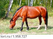 Купить «Лошадь», фото № 1958727, снято 29 августа 2010 г. (c) Хайрятдинов Ринат / Фотобанк Лори