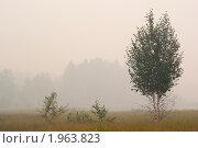 Березка в тумане. Стоковое фото, фотограф Евгений Селезнев / Фотобанк Лори