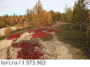 Осень в тундре. Стоковое фото, фотограф Нестерова Юлия / Фотобанк Лори
