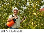 Купить «Мужчина опрыскивает яблоню», фото № 1987831, снято 25 июля 2010 г. (c) Дарья Филимонова / Фотобанк Лори