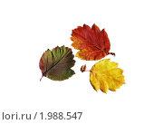 Купить «Три цвета осени», фото № 1988547, снято 25 мая 2018 г. (c) Ольга Долотина / Фотобанк Лори