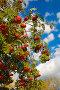 Осенние краски, фото № 1988927, снято 21 сентября 2010 г. (c) Наталья Волкова / Фотобанк Лори