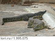 Купить «Нильский крокодил», эксклюзивное фото № 1995075, снято 15 сентября 2010 г. (c) Александр Тарасенков / Фотобанк Лори