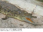 Купить «Нильский крокодил», эксклюзивное фото № 1995079, снято 15 сентября 2010 г. (c) Александр Тарасенков / Фотобанк Лори