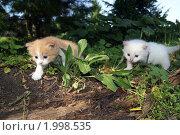 Котята в лесу. Стоковое фото, фотограф Гуляев Роман / Фотобанк Лори