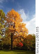 Купить «Дерево в осеннем парке», фото № 2001015, снято 19 октября 2018 г. (c) Светлана Привезенцева / Фотобанк Лори