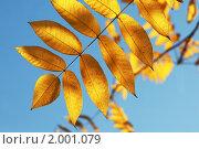 Купить «Желтые листья», фото № 2001079, снято 19 октября 2018 г. (c) Светлана Привезенцева / Фотобанк Лори