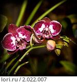 Орхидеи. Стоковое фото, фотограф Андрей Вуколов / Фотобанк Лори