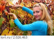 Молодая девушка убирает виноград. Стоковое фото, фотограф Евгений Курлыкин / Фотобанк Лори