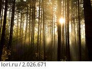 Купить «Солнечный свет в густом лесу», фото № 2026671, снято 26 сентября 2010 г. (c) Карелин Д.А. / Фотобанк Лори