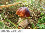 Купить «Белый гриб!», фото № 2031231, снято 12 сентября 2010 г. (c) Елена Ильина / Фотобанк Лори