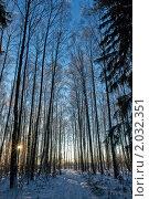 Купить «Зимний лес», фото № 2032351, снято 12 января 2010 г. (c) Ольга Денисова / Фотобанк Лори