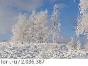 Купить «Заснеженные деревья. Зимний пейзаж», фото № 2036387, снято 8 января 2010 г. (c) Татьяна Кахилл / Фотобанк Лори