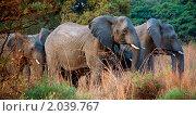 Слоны (2010 год). Стоковое фото, фотограф Дмитрий Поляков / Фотобанк Лори