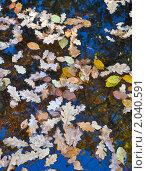 Фон из опавших листьев в воде. Стоковое фото, фотограф Ольга Крупская / Фотобанк Лори