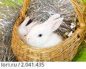 Купить «Белые кролики в плетёной корзине», фото № 2041435, снято 31 июля 2010 г. (c) Яков Филимонов / Фотобанк Лори
