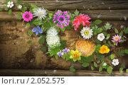 Цветочный фон. Стоковая иллюстрация, иллюстратор Дмитрий Хрусталев / Фотобанк Лори