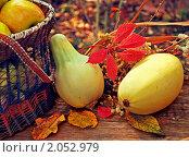Купить «Осенний натюрморт с яблоками и кабачками», фото № 2052979, снято 10 августа 2010 г. (c) Светлана Зарецкая / Фотобанк Лори