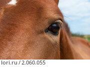 Глаз лошади. Стоковое фото, фотограф Юрий Андреев / Фотобанк Лори