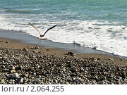 Купить «Чайка на берегу Чёрного моря», фото № 2064255, снято 12 октября 2010 г. (c) Светлана Соколова / Фотобанк Лори