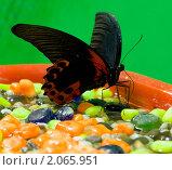 Купить «Бабочка», фото № 2065951, снято 30 августа 2010 г. (c) Шильникова Дарья / Фотобанк Лори