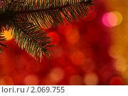 Купить «Новогодоняя елка», фото № 2069755, снято 12 октября 2010 г. (c) yarruta / Фотобанк Лори