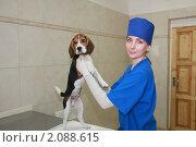 Купить «Женщина-ветеринар со щенком породы бигль», фото № 2088615, снято 27 мая 2009 г. (c) Галина Бурцева / Фотобанк Лори
