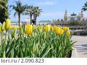 Купить «Тюльпаны в Монако», фото № 2090823, снято 23 марта 2010 г. (c) Владимир Овчинников / Фотобанк Лори
