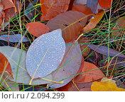 Купить «Опавшая осенняя листва с росой», фото № 2094299, снято 25 октября 2010 г. (c) Олег Кириллов / Фотобанк Лори