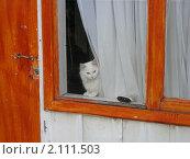 Кошка в окне. Стоковое фото, фотограф Зуев Алексей / Фотобанк Лори