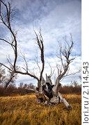 Купить «Деревья умирают стоя», фото № 2114543, снято 16 августа 2018 г. (c) Евгений Свитайло / Фотобанк Лори