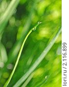 Купить «Абстрактный зеленый фон, трава с каплями воды», фото № 2116899, снято 23 июля 2009 г. (c) Светлана Зарецкая / Фотобанк Лори