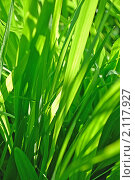 Купить «Абстрактный зеленый фон, трава с каплей воды», фото № 2117927, снято 23 июля 2009 г. (c) Светлана Зарецкая / Фотобанк Лори