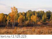 Купить «Осенний пейзаж с березами и соснами», фото № 2125223, снято 17 сентября 2010 г. (c) Виталий Горелов / Фотобанк Лори