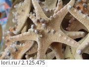 Купить «Морская звезда», фото № 2125475, снято 9 сентября 2010 г. (c) Мариэлла Зинченко / Фотобанк Лори