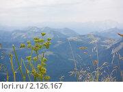 Вид на горы сквозь полевую траву. Стоковое фото, фотограф Валерий Степанов / Фотобанк Лори