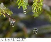 Купить «Капель», фото № 2126371, снято 7 ноября 2010 г. (c) Argument / Фотобанк Лори