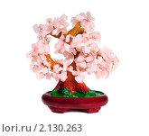 Купить «Каменное дерево», эксклюзивное фото № 2130263, снято 6 ноября 2010 г. (c) Юрий Морозов / Фотобанк Лори