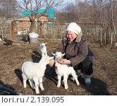 Купить «Женщина кормит маленьких белых козлят», эксклюзивное фото № 2139095, снято 14 ноября 2010 г. (c) Ольга Линевская / Фотобанк Лори
