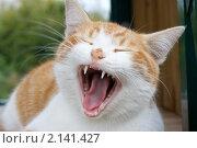 Купить «Рыжий кот», фото № 2141427, снято 16 сентября 2010 г. (c) Михаил Ворожцов / Фотобанк Лори